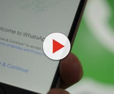 WhatsApp, molti di voi stanno violando le linee guida senza saperlo