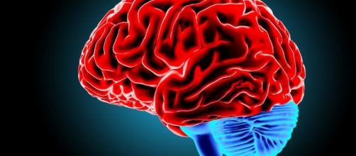 Trovata nel cervello la culla della schizofrenia - improntaunika.it