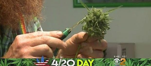 Do you know the origin of 4/20 Day? [Image: CBS Los Angeles/YouTube screenshot]