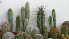 Consejos para el cuidado de los cactus en el hogar