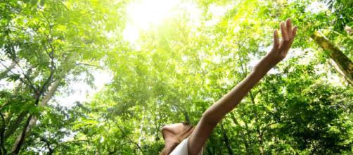 Beneficios de convivir con la naturaleza para tu salud