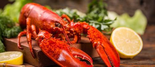 Langosta: uno de los productos más apreciados del mar - Cocina y Vino - cocinayvino.com
