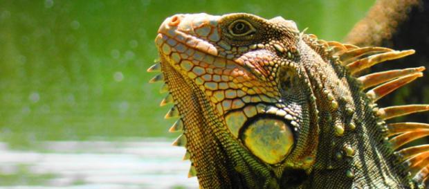 La Alianza Mexicana por la Biodiversidad exige a los políticos mexicanos que cumplan sus promesas.