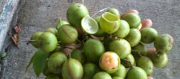 La Huaya es una fruta que cura el cáncer - ViviendoSanos.com - viviendosanos.com