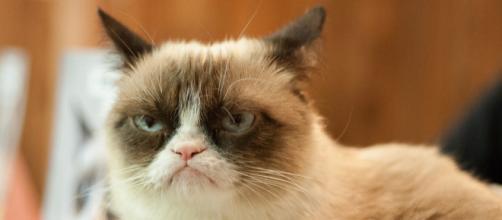 Curiosidad de hoy: los gatos nos entienden pero deciden no hacernos caso