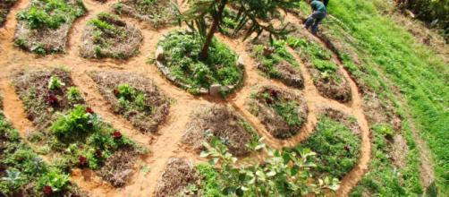 La Permacultura: un estilo de vida sustentable