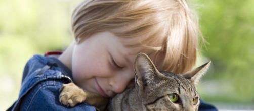 ¿Por qué deberías tener un gato como mascota?