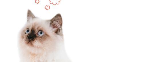 ¿Quieres saber por qué ronronea un gato?