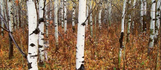 Das rätselhafte Bild: Hier befindet sich ein Tier im Wald! Kannst du es finden?