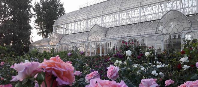 La mostra di piante e fiori a Firenze al Giardino dell'Orticoltura