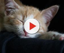 Consejos para que tu gato pueda dormir contigo - notigatos.es
