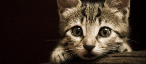 Cuidados gatunos – Sonrisas de gato - sonrisasdegato.com