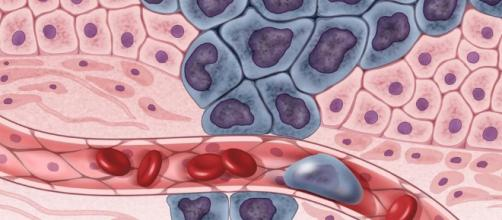 La ciencia, el ABC de los tumores fue descubierto