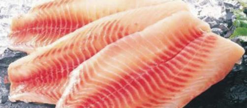 Tilapia, el pez mortal para todos