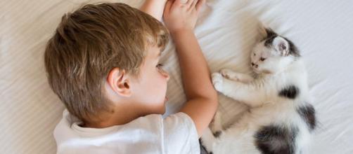 10 señales que indican que tu gato te quiere - expertoanimal.com
