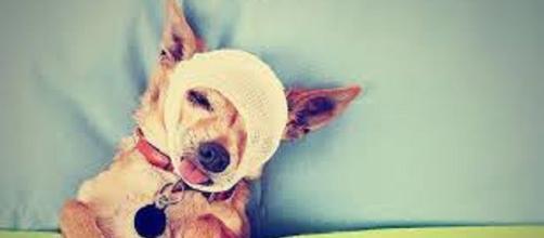 Los animales también sienten dolor