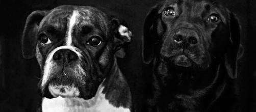 La cifra de abandonos de mascotas en España constituye un problema que precisa una mayor intervención