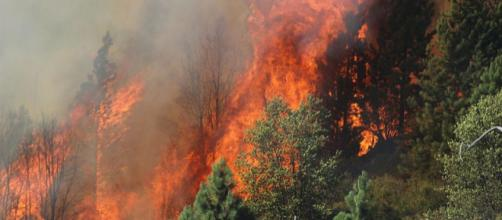 The Rim Fire in the Stanislaus National Forest near California [Image source: Mike McMillan - Wikimedia Commons]