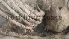 Bizarro esqueleto é achado em praia da Inglaterra