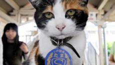 La increíble historia de Tama: la gata que es jefe de estación en Japón