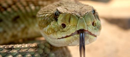 ¿Qué hacer, si eres mordido por una serpiente?