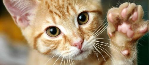 Aquí te presentamos 15 hechos curiosos sobre gatos que no conocías