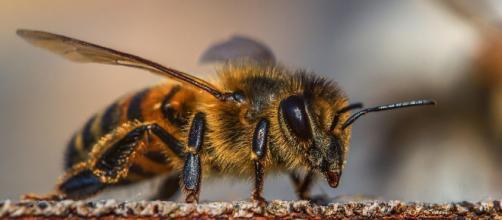 Unión Europea prohíbe tres pesticidas para proteger a las abejas ... - elespectador.com