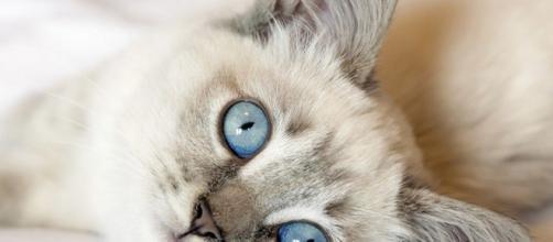 Historia y curiosidades acerca de los gatos