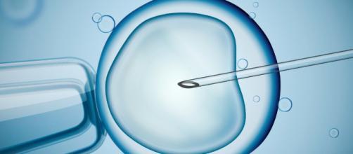 """¿Nos hallamos en plena """"embriología sintética""""?"""