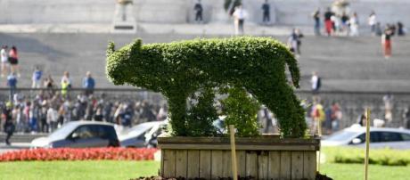 Roma, in piazza Venezia arriva una siepe a forma di lupa