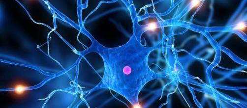 Colesterol de la mielina impide la reparación neuronal en la EM - fundaciongaem.org
