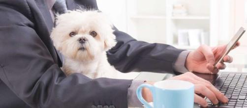 Mascotas en el trabajo: una tendencia peluda que invade el mercado
