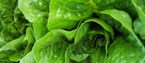 The notorious E. Coli outbreak, tied to romaine lettuce, is expanding to more states. - [Image by Flickr]