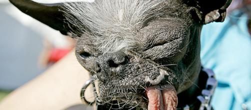 la perra Mas Feo Del Mundo ~ Dikidu.com - dikidu.com