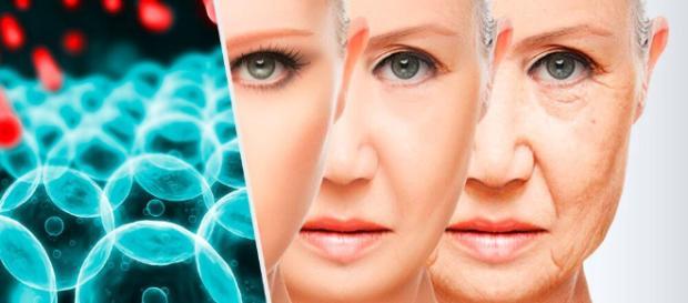 antidoto del envejecimiento - - mejorconsalud.com