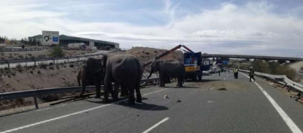 Elefanten rennen nach Unfall in Spanien auf Strasse herum - Blick - blick.ch