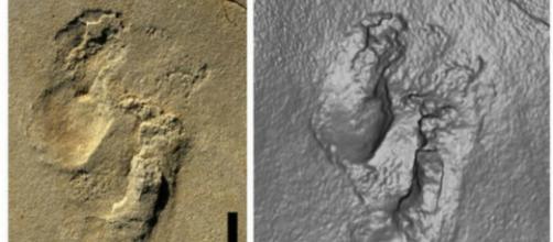 Evoluzionismo, impronta umana datata 5,7 milioni di anni fa, Creta (Grecia)