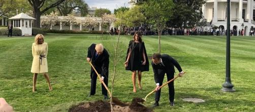 The tree that President Trump and President Macron planted in front of the White House disappeared - Paris Match | YouTube.com