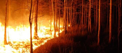 Wildfires threatens more than 500 homes in Arizona - U.S. Fish and Wildlife Service   Flickr