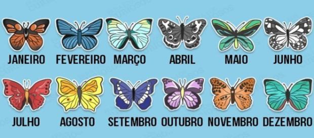As borboletas revelam mais sobre o futuro
