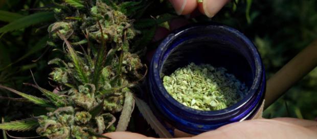 Cannabis industry - Image via Flickr.