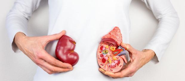 Día Mundial del Riñón, evitar la obesidad es fundamental - telemetro.com