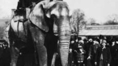 El triste final de un elefante de circo