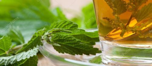 Cóctel verde con ortiga — Foto de ... - depositphotos.com