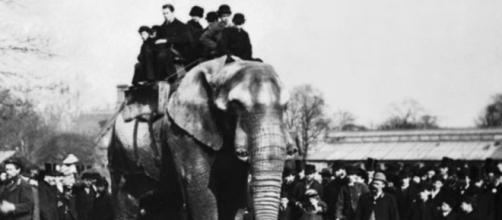 Un lamentable accidente perjudicó a los elefantes en España. - elespectador.com
