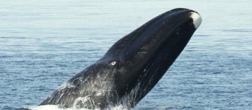Todo sobre las ballenas, tipos y características - nauticalnewstoday.com