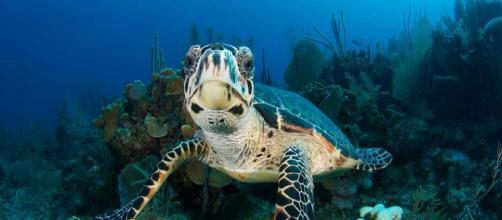 Conservación de las especies en peligro de extinción con la ayuda de software