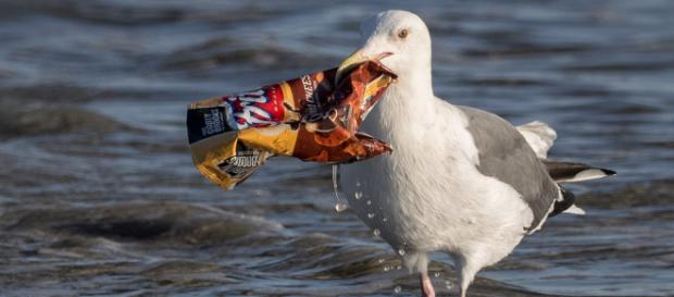 Stop trashing my ocean... or at least have the decency to leave some chips. - [Image via Ingrid Taylar / Wikimedia Commons]