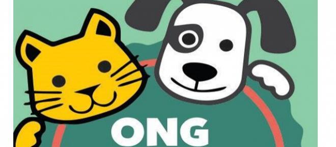 Conheça o trabalho da ONG E-Pet em prol de animais carentes
