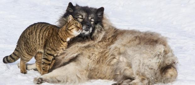 Dogs and cats getting along. - [Image via Pixabay]